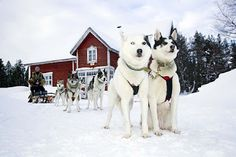 Ready for a ride? Rovaniemi, Lapland, Finland