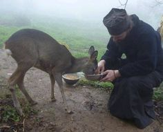 Orthodox monk feeding a young deer. SO CUTE!