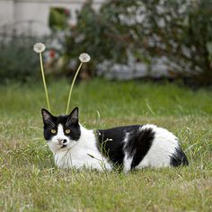 mostlycatsmostly:  My Favorite Martian (by eyepiphany)