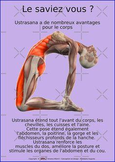 « Planches Musculo-squelettique des positions de Yoga - N°1 » par rodolphe Augusto | Redbubble