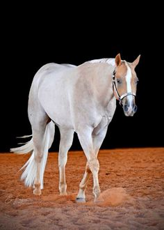 Interesting colors on this qh All The Pretty Horses, Beautiful Horses, Animals Beautiful, Cute Horses, Horse Love, American Quarter Horse, Quarter Horses, Zebras, Western Pleasure Horses