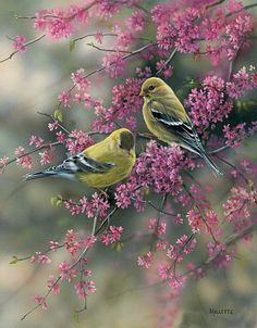 Superbe peinture d'oiseau  romarin millette. American Goldfinch, male and female beautiful birds.