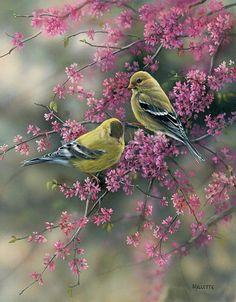 Superbe peinture d'oiseaux  rosemary millette