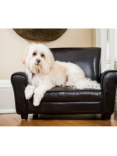 free shipping jewel a 45 pound labradormix can be found on the rockwell dog couch a high quality fauxleather dog couch with a soft and plush eu2026
