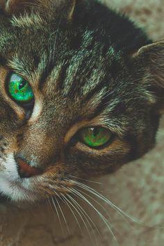 Photo by Mark Macnamara. Check out Mark's profile: https://www.pexels.com/u/mark-macnamara-328749/ #animal #pet #cute