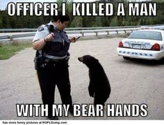 Big Bad Bear #meme #funny #bear #lol