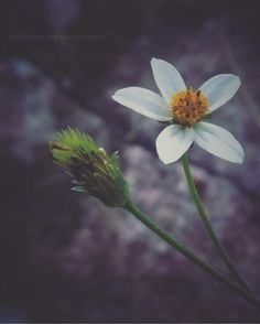LIL FLOWER WHITE  DARKNESS   aharsh babu