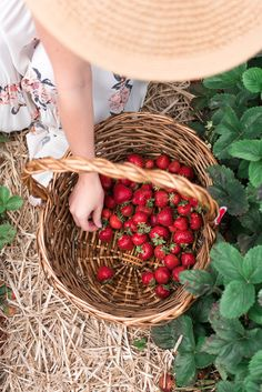lifestylebyannaelizabethWho's planning on picking their own strawberries this year! It has been one of my favorite activities to check off our Summer bucket list so far 🍓🍓 Tag us in your orchard photos and hashtag to be featured! Strawberry Farm, Strawberry Picking, Strawberry Patch, Strawberry Fields, Fruit Picking, Farm Lifestyle, Summer Bucket Lists, Slow Living, Country Life