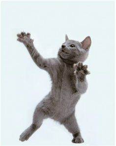Dancing cat, funny cat