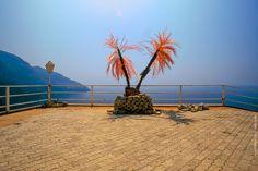 Red easter palm : Terracina, Lazio @ 1987.07.09