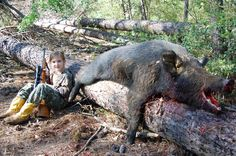 Ferral hog | Hog Hunts, Russian Boars, Wild pigs.Hog hunting hunting hogs wild ...
