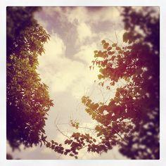 Dear afternoon sky