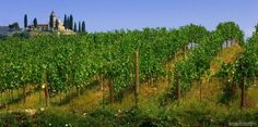 Coutryside: franciacorta (land of franciacorta wine)