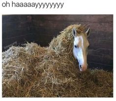 30 Animal Memes That Will Make You Laugh Until You Cry - Horses Funny - Funny Horse Meme - - 30 Animal Memes That Will Make You Laugh Until You Cry The post 30 Animal Memes That Will Make You Laugh Until You Cry appeared first on Gag Dad. Funny Horse Memes, Funny Horse Pictures, Funny Horses, Cute Horses, Pretty Horses, Funny Pics, Funny Memes, Cat Memes, Horse Humor