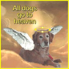 Jewels Art Creation is my original artwork both funny and inspirational. Pet Poems, Pet Remembrance, Dog Heaven, Dog Pictures, Moving Pictures, Animal Antics, Animal Habitats, Rainbow Bridge, Dogs Of The World