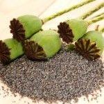 http://www.herbaldb.com/category/ayurvedic-herbs/ Ayurveda