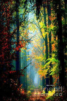 Rafael Salazar - Autumn Trails in Georgia