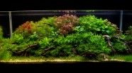 Aquascaping мировой конкуренции - Галерея