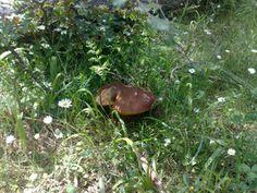 La #Sila e le sue pepite, i funghi porcini