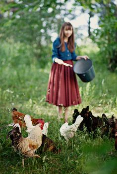 A guide to raising and keeping chickens