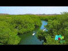 Stand Up Paddle (SUP) boarden in de mangroven op Aruba