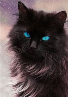Beautiful Eyes http://www.mainecoonguide.com/fun-facts-maine-coon-cats/