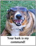"""Your Bark Is My Command These unique dog note cards are sure to suit any occasion. 5 1/2"""" x 4 1/4"""" card with matching envelope sealed in plastic. Blank inside."""