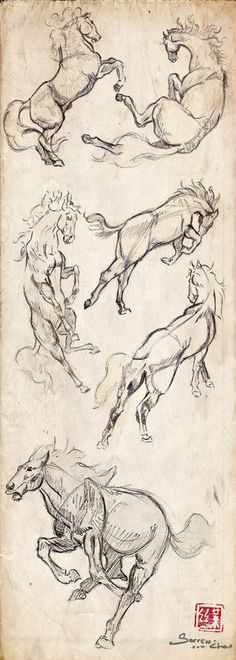 How to draw horses.
