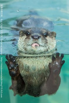 CUTE LITTLE SWIMMING OTTER
