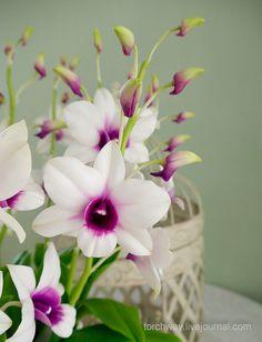 Мастер-классы Елены Белан | ClayFlorist – Цветы ручной работы