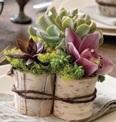 ciaonewportbeach.blogspot.com ~ creative succulents