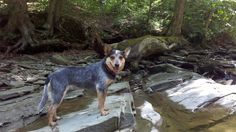 Hiking buddy, Chautauqua Gorge State Forest