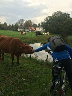 Gerri voert koe