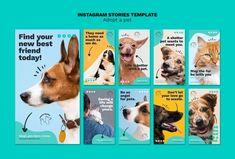 Perros Border Collie, Profile Logo, Instagram Advertising, Minimal Web Design, Dog Branding, Dog Poster, Instagram Design, Instagram Story Template, Social Media Design