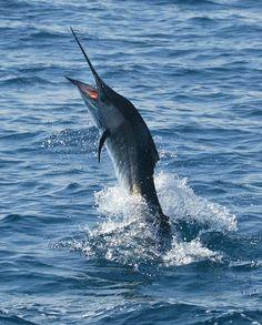 Islamorada, FL - sport fishing capital of the world!