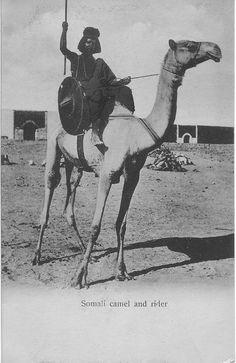 Somali Camel and rider