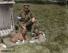 Royal Engineers handler at the Army Vet Corps Headquarters near Nieppe Wood on 19 May 1918. The paws of the dogs are bandaged as to protect the burns they suffered from mustard gas.