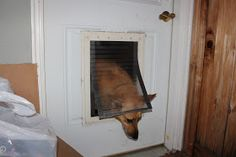 DIY Doggie Door For Screen Door. I Looked And Looked And Could Find What I  Wanted, So I Went To Home Depot And For Under $12 I Made Exactly Whatu2026