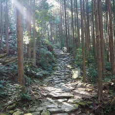 jzjstm on Instagram pinned by myThings 今日寒すぎるので… [#みえ食旅 振り返り] 世界遺産熊野古道は石畳と木々の木漏れ日、生き生きした植物たちが印象的。ここ#馬越峠 は初心者でも歩きやすいのでオススメ!昔の人たちは荷物持って草履でここを歩いたかと思うと感服… 健脚だったんだろうなぁー #熊野古道 #馬越峠 #jzzymeetsmie2016 #japan #japantrip #kumano