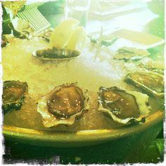 Hog Island Oysters ~ fav