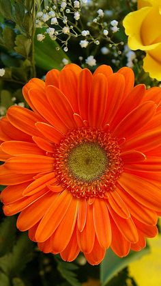 gerbera_roses_gypsophila_bouquet_decoration_close-up_30078_640x1136 | Flickr - Photo Sharing!