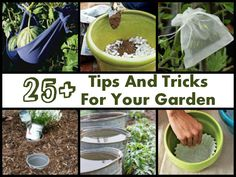 25+ Tips And Tricks For Your Garden