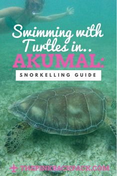 Turtles in Akumal, Mexico Interested in swimming or snorkelling with the famous turtles of Akumal, Mexico? This guide will tell you how to avoid scams and snorkel with the turtles of Akumal, Mexico for FREE! Beach Activities, Travel Activities, Best Scuba Diving, Akumal Mexico, Mexico Culture, Mexico Resorts, Snorkelling, Koh Tao, Playa Del Carmen