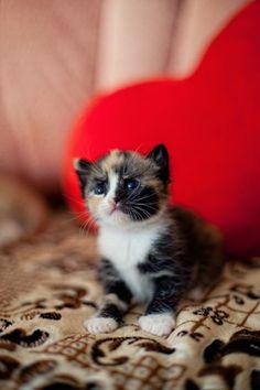 My little heart belongs to you!