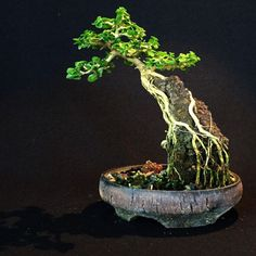 How to make rock for bonsai on the rock