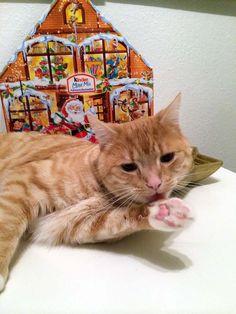 Weihnachten mit Katzen zusammen feiern? Kein Problem, wenn Du diese Hinweise beachtest!