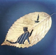Original Handmade carving on natural leaves - Custom Portrait - Still life - Architecture painting - Animal portrait - Woman portrait - Kids portrait - Family portrait - Home and living decor. I hope one of my carving leaves finds a place in your home and it gives you as much joy as it gave me carving. https://www.etsy.com/shop/CarvedLeaves