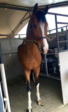 - Art Of Equitation Cute Horses, Pretty Horses, Horse Love, Horse Girl, Beautiful Horses, Animals Beautiful, Horse Photos, Horse Pictures, Equine Photography