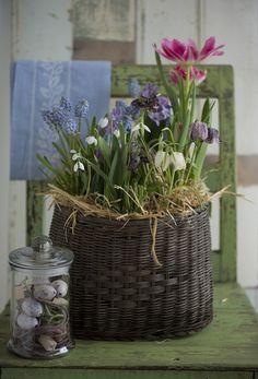 Pynt til påske med pasteller Flower Basket, Flower Pots, Hoppy Easter, Spring Has Sprung, Garden Chairs, Bouquet, Beautiful Flowers, Colorful Flowers, Spring Flowers