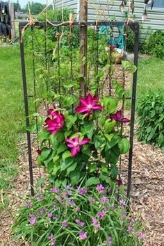 - using a pole, a wheel, a crib spring and some twine - you have a great new trellis for your beautiful clematis to climb! Clematis Trellis, Diy Trellis, Garden Trellis, Crib Spring, Old Cribs, Porch Garden, Patio, Garden Steps, Outdoor Crafts